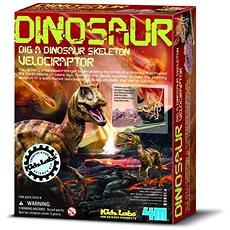 Dinoszaurusz csontváz - velociraptor - Kísérletező készlet