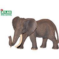 Atlas Afrikai elefánt