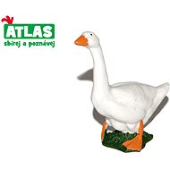 Atlas Lúd - Figura