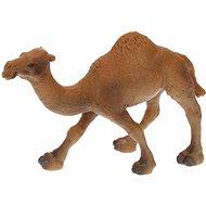 Atlas Egypúpú teve