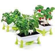 Educa Kicsi kertem - eper, menta, bazsalikom - Kísérletező készlet