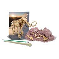 Dinoszaurusz csontváz - Mamut - Kísérletező készlet