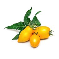 Véritable Lingot Mini sárga paradicsom - Ültetvény