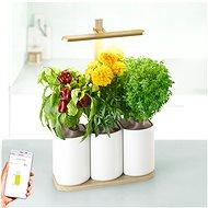 Pret a Pousser Lilo Edition - Okos virágcserép